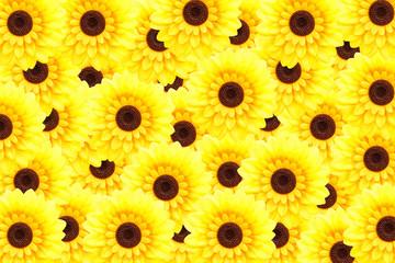Artificial sunflower background (Helianthus annuus)