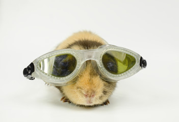 baby-goggle
