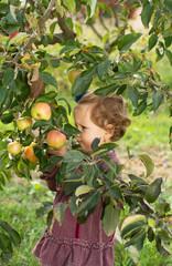 Apple tree baby