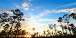 Everglades Forest Sunset