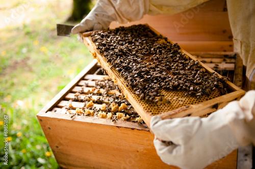 Staande foto Bee Imker untersucht Wabenrahmen mit vielen Bienen