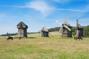 Four historic windmilsl in a Ukraine landscape with horses