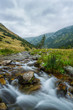 Beautiful mountain stream and fir trees in the Alps - 69858020