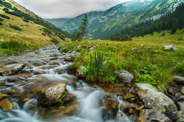 Beautiful mountain stream and fir trees in the Alps