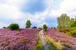 Leinwandbild Motiv Wanderweg durch die blühende Heidelandschaft