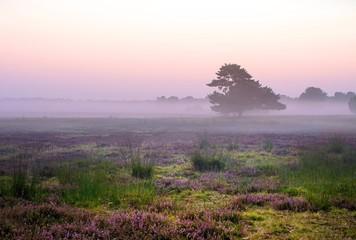 traumhafter Sonnenaufgang bei Nebel in der Lüneburger Heide