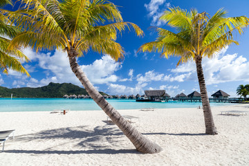 Palme su una spiaggia bianca in Polinesia francese. Bora Bora