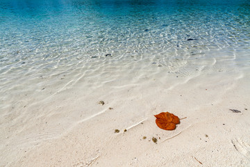 White beach with transparent water in FrenchPolinesia, Bora Bora