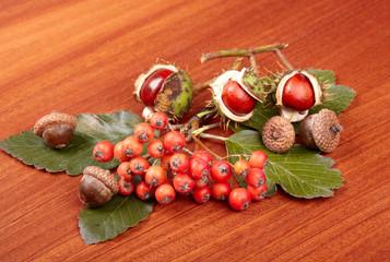 berries and green leaves of rowan