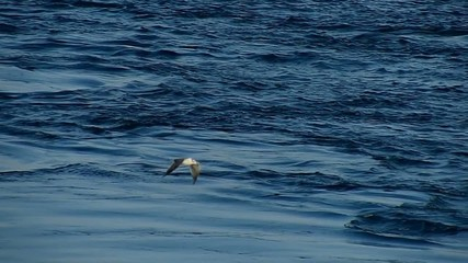 海鳥4_スーパースローモーション