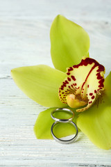 Wedding rings and orchid flower, close-up,