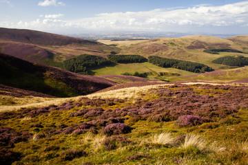 Scotland Pentlands Hill Pentland heather bloom