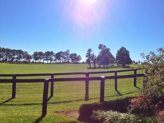 Sunny day at country horse farm