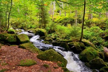 Bach mit Quellwasser im Wald