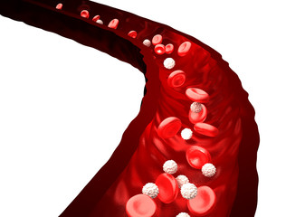 Blood Stream - Red and White Blood Cells Flowing