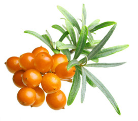 Sea buckthorn isolated