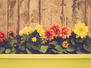 Flowers in Planter on Wooden Wall