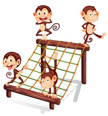 Four playful monkeys