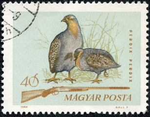 grey partridge and hunting rifle