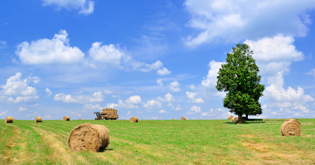 Bales of straw after threshing
