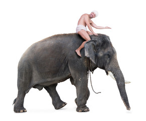 cheerful mahout rides on an elephant