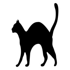 silhouette afraid cat