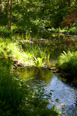 River Scenic with Lush Green Vegetation