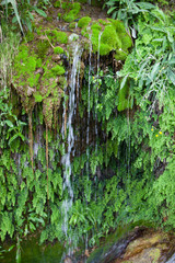 Waterfall Surrounded by Lush Green Moss and Plants