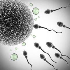 sperm and egg cell. microscopic