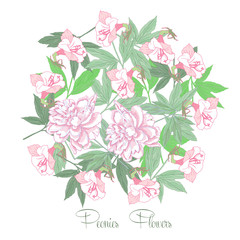 Flowers  and white pink peonies
