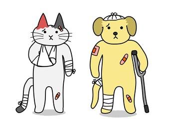 犬と猫、けが