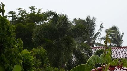 Tropical Rain on Koh Samui. Thailand.