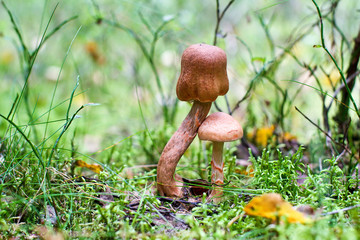 a couple of mushrooms in the forest