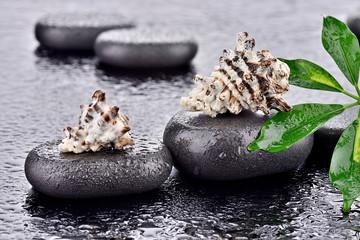 Muszle na kamieniach bazaltowych