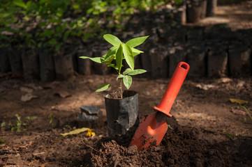 plant sapling with orange trowel