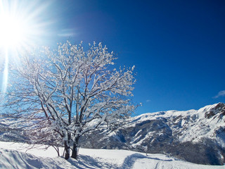 Landscape with sunshine and snowy tree in the Alps, France