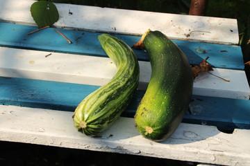 Geerntete Zucchinis