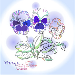 Pansy on blue  background