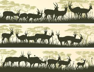 Horizontal banners of wild antelope in African savanna.