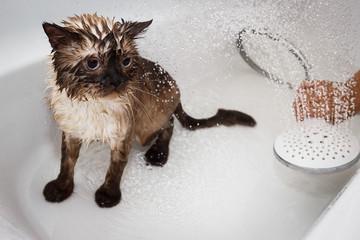 Wet tomcat