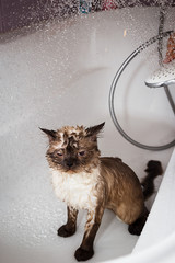 Wet cat part 2