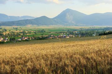 Countryside near Golpazari, Bilecik