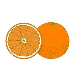 Sliced orange fruits isolated on a white background. Hand drawn