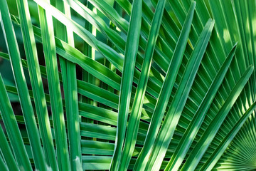 Interwoven Palm Leaves Background