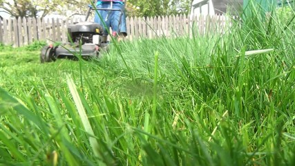Lawn Mower, Grass Cutter, Landscaping