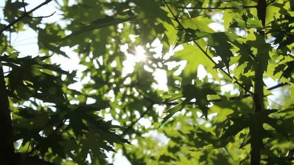 солнце сквозь  ветви