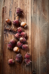 Fresh whole hazelnuts on a wooden surface