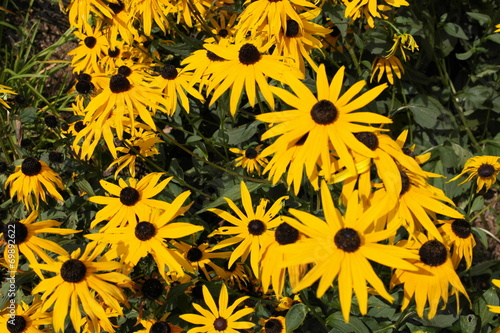 canvas print picture yellow flowers
