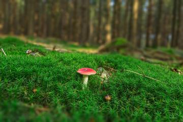 Pilz, Moos, Wald