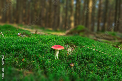canvas print picture Pilz, Moos, Wald